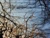 Träd & Himmel