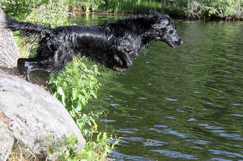 Hoppande Rufus
