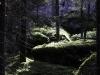 Skog i Skärmarboda