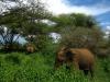 zanzibarTanzania200701 (35)