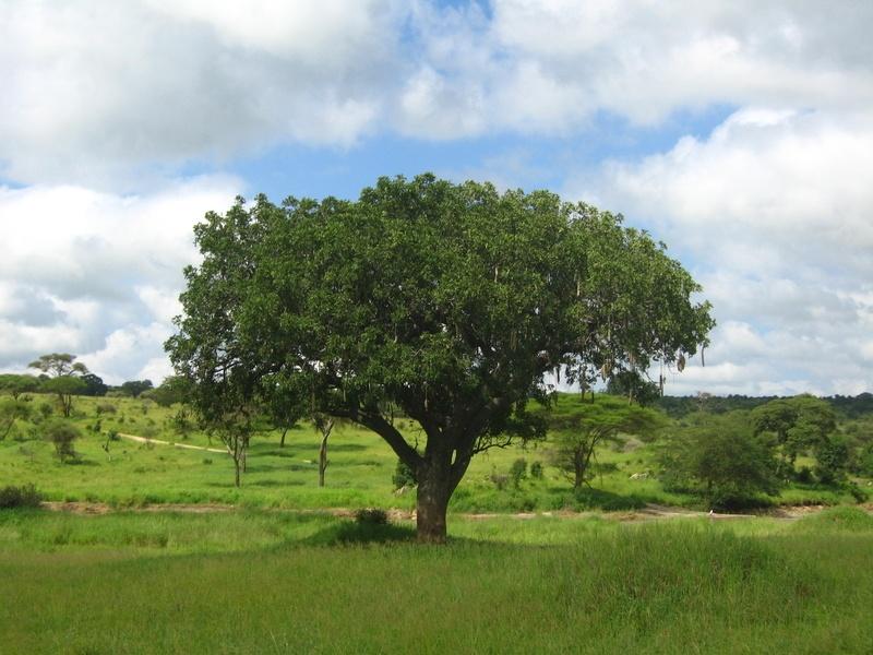 zanzibarTanzania200701 (40)