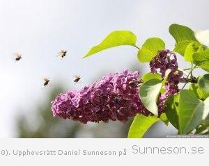 sunneson.se